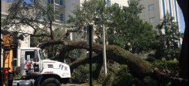 Aaa Tree Service Tallahassee