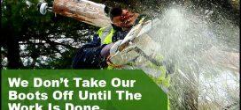 Abc Professional Tree Services Inc