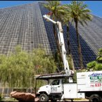 Affordable Tree Service Las Vegas