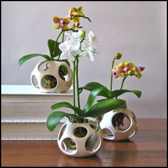 Best Pots For Orchids