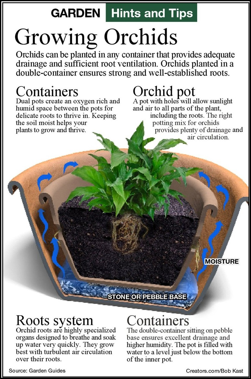 Best Soil For Orchids