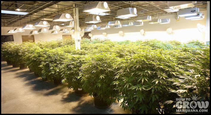 Best Way To Grow Cannabis Indoors