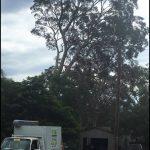 C & S Tree Service