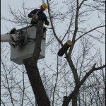 Eau Claire Tree Service