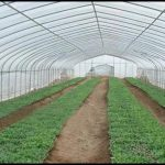 Greenhouse Plastic For Sale
