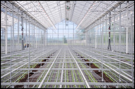 How Much Does A Greenhouse Cost