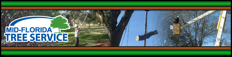 Mid Florida Tree Service