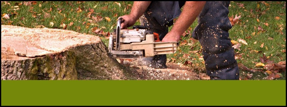 Mountain View Tree Service