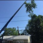 Perfect Cut Tree Service