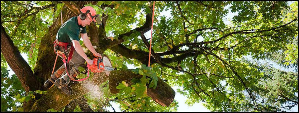 Tree Cutting Service Nj