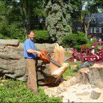 Tree Service Albany Ny