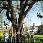 Tree Service Colorado Springs