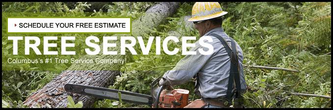 Tree Service Columbus Ga