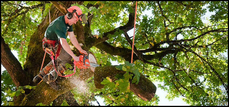 Tree Service Columbus Ohio