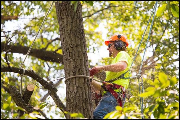 Tree Service Fredericksburg Va