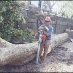 Tree Service Huntsville Al