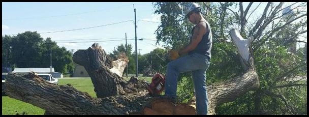 Tree Service Lincoln Ne