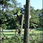 Tree Service Magnolia Tx