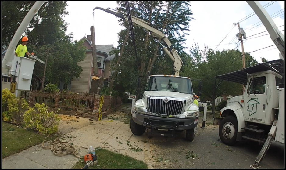 Tree Service Monmouth County Nj