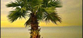 Tree Service Palm Harbor Fl