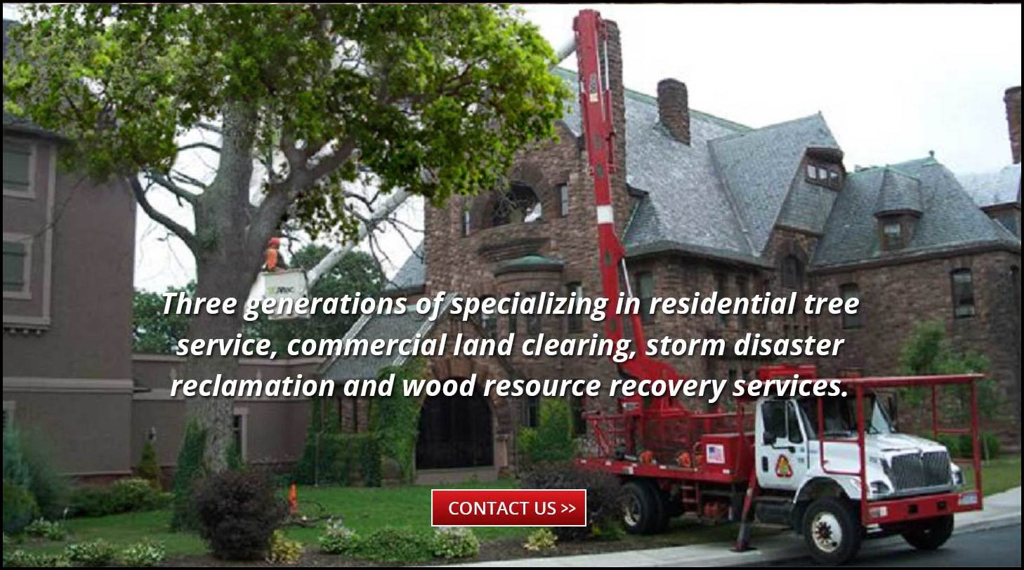 Tree Service Rochester Ny