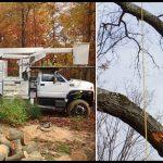 Tree Service South Jersey