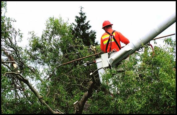 Tree Service Suffolk County Ny