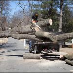 Tree Service Syracuse Ny