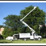 Tree Trimming Service Near Me