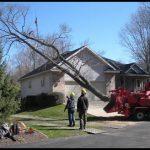 West Michigan Tree Service