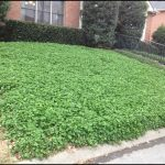 Clover Lawn And Landscape