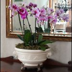 How To Keep Orchids Alive