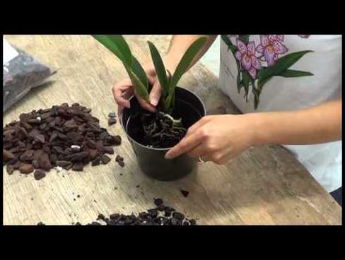 How To Transplant An Orchid