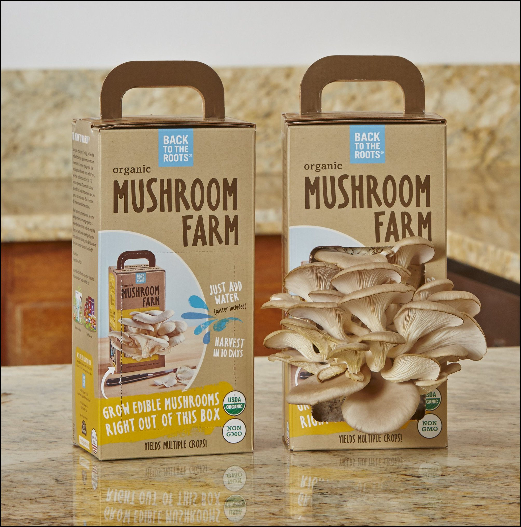 Mushroom Grow Kit Usa