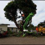 A 1 Tree Service