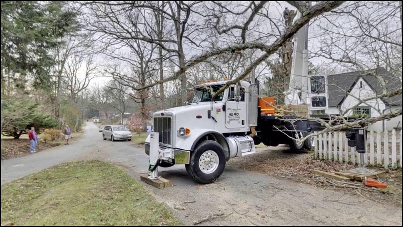 All Pro Tree Service