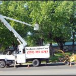 Arbor Care Tree Service