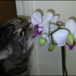 Are Orchids Toxic To Cats