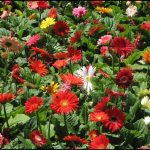 Best Fertilizer For Flowers