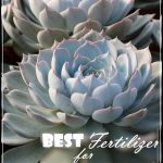 Best Fertilizer For Succulents
