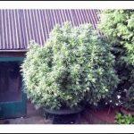Best Fertilizer For Weed