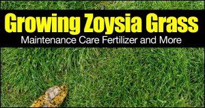 Best Fertilizer For Zoysia