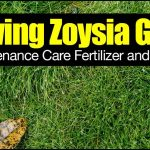 Best Fertilizer For Zoysia Grass