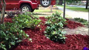 Best Mulch For Flower Beds