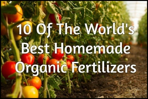 Best Organic Fertilizer For Tomatoes