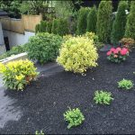 Black Mulch At Home Depot