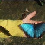 Butterfly Garden Near Me