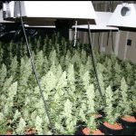 Cheap Led Grow Lights For Indoor Plants
