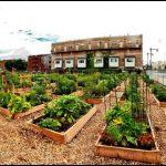 Community Garden Near Me
