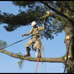 Cut Above Tree Service